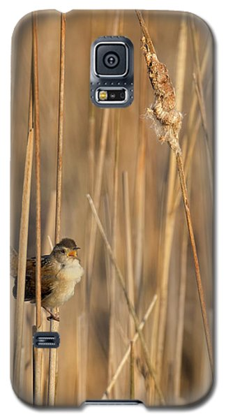 Marsh Wren Galaxy S5 Case by Bill Wakeley