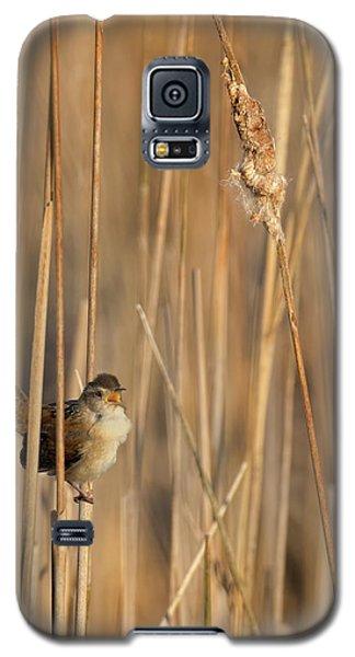 Marsh Wren Galaxy S5 Case