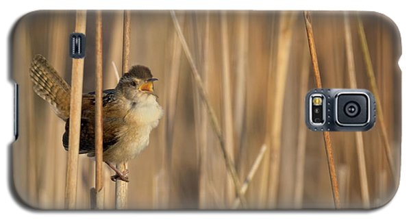 Marsh Wren Square Galaxy S5 Case by Bill Wakeley