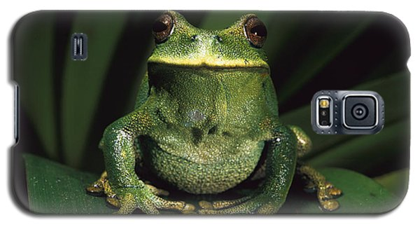 Marsupial Frog Gastrotheca Orophylax Galaxy S5 Case by Pete Oxford