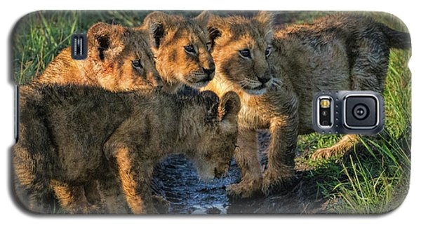 Galaxy S5 Case featuring the photograph Masai Mara Lion Cubs by Karen Lewis