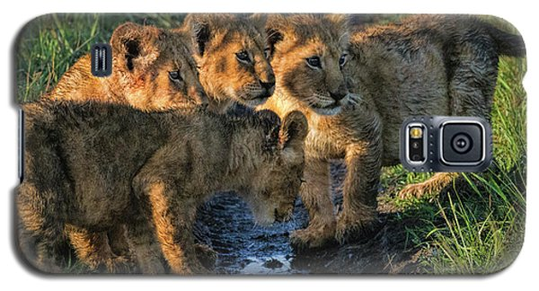 Masai Mara Lion Cubs Galaxy S5 Case