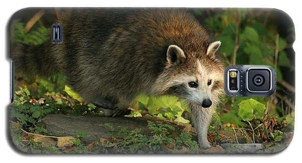 Galaxy S5 Case featuring the photograph Maskless Raccoon by Doris Potter