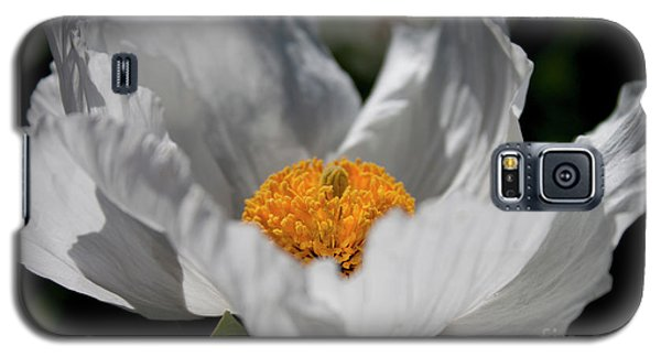 Matilija Poppy Galaxy S5 Case