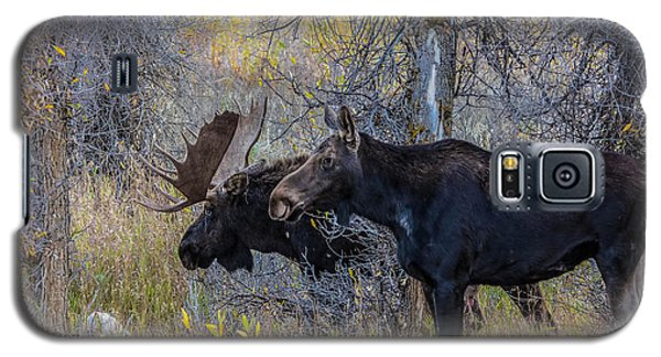 Mating Moose Galaxy S5 Case by Kelly Marquardt