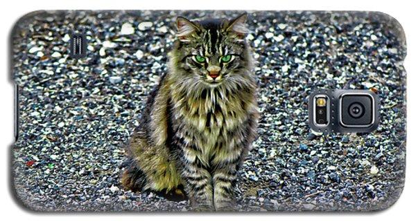 Mattie The Main Coon Cat Galaxy S5 Case