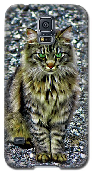 Mattie The Main Coon Cat Galaxy S5 Case