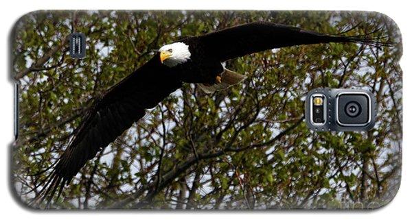 Mature Bald Eagle Galaxy S5 Case