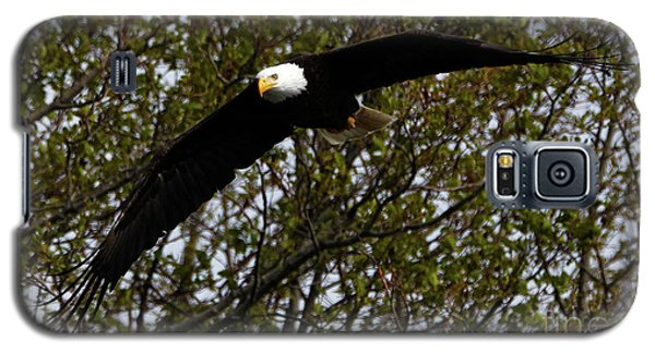 Mature Bald Eagle Galaxy S5 Case