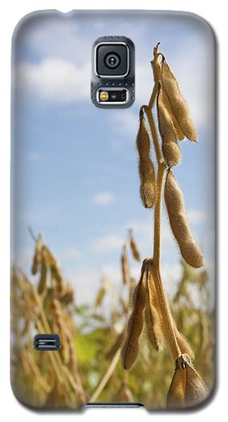 Galaxy S5 Case featuring the photograph Maturing Soybeans by Dylan Punke