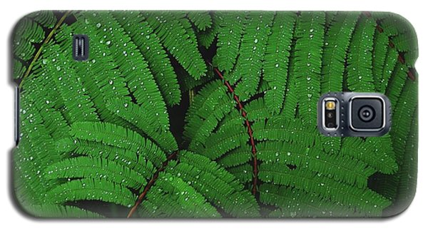 Maui Forest Galaxy S5 Case