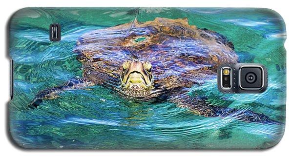 Maui Sea Turtle Galaxy S5 Case