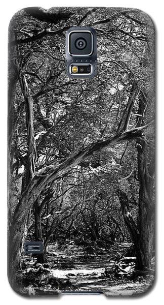 Maui Trees Galaxy S5 Case by Art Shimamura