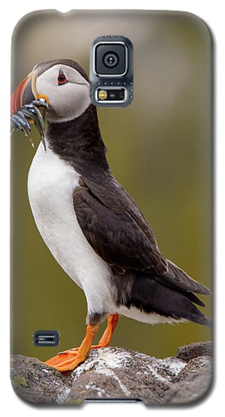 May Puffin Galaxy S5 Case
