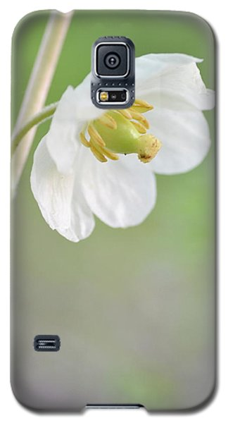 Mayapple Flower Galaxy S5 Case by JD Grimes