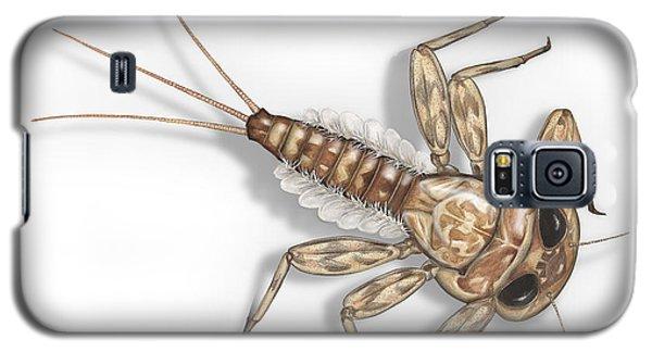 Mayfly Larva Nymph Rithorgena Ecdyonurus Venosus - Moscas De May Galaxy S5 Case