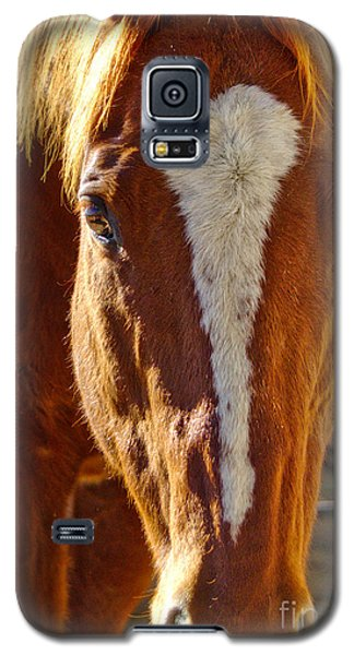 Mccool, Grandson Of Secretariat Galaxy S5 Case