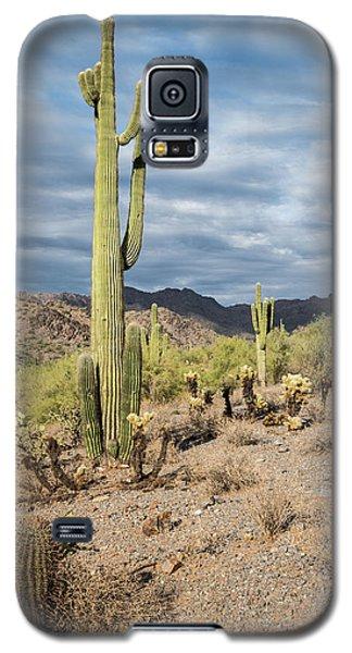 Mcdowell Cactus Galaxy S5 Case