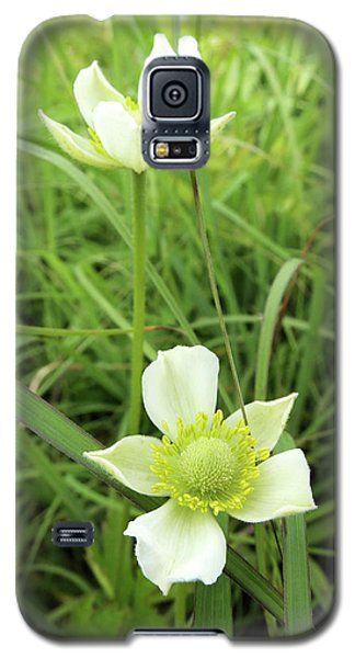 Galaxy S5 Case featuring the photograph Meadow Anemone by Scott Kingery