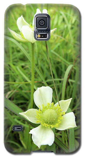 Meadow Anemone Galaxy S5 Case by Scott Kingery