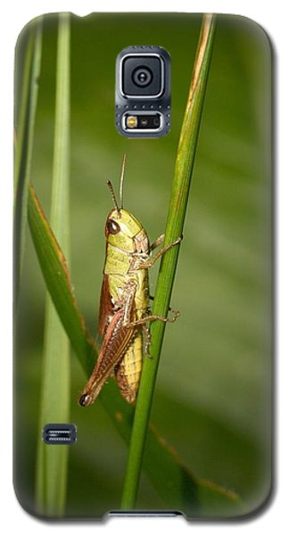 Galaxy S5 Case featuring the photograph Meadow Grasshopper by Jouko Lehto