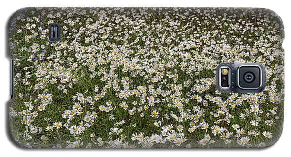 Galaxy S5 Case featuring the photograph Meadow Of Daisey Wildflowers Panorama by James BO Insogna