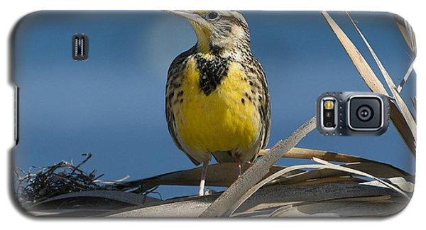 Meadowlark Galaxy S5 Case - Meadowlark Beauty by Fraida Gutovich