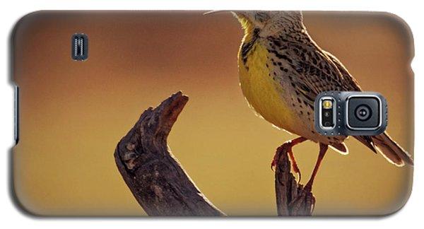 Meadowlark Galaxy S5 Case