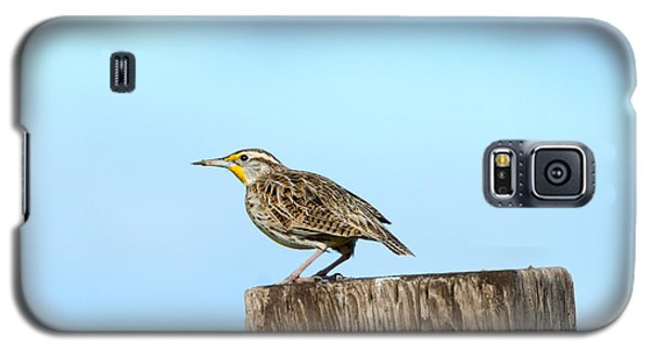 Meadowlark Roost Galaxy S5 Case by Mike Dawson