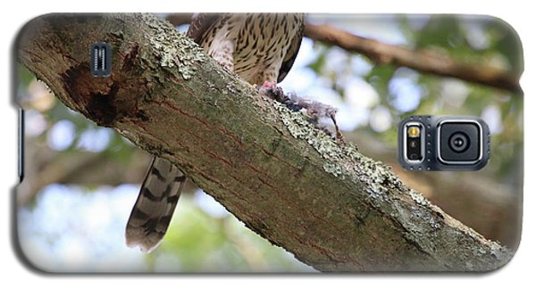 Mean Hawk At Dinner Time Galaxy S5 Case