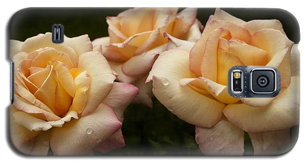Medley Of Three Yellow Roses Galaxy S5 Case by Barbara Middleton