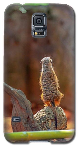 Meerkat 2 Galaxy S5 Case