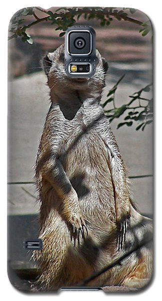 Meerkat 2 Galaxy S5 Case by Ernie Echols