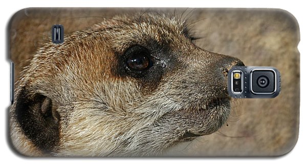 Meerkat 3 Galaxy S5 Case by Ernie Echols