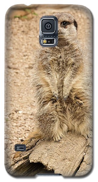 Meerkat Galaxy S5 Case by Chris Boulton