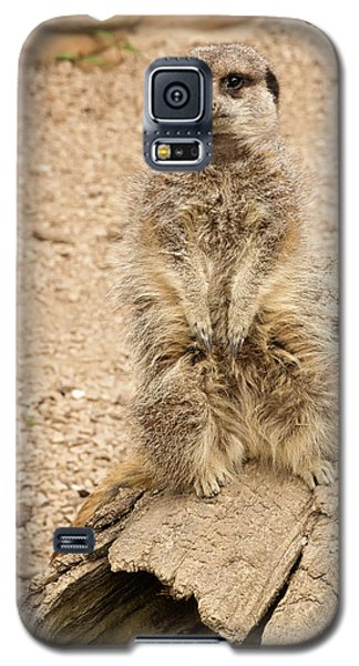 Galaxy S5 Case featuring the photograph Meerkat by Chris Boulton