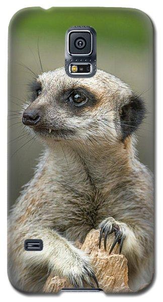 Meerkat Model Galaxy S5 Case