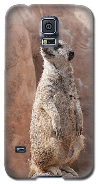 Meerkat Sentry 1 Galaxy S5 Case