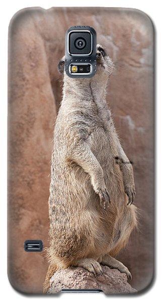 Meerkat Sentry 2 Galaxy S5 Case