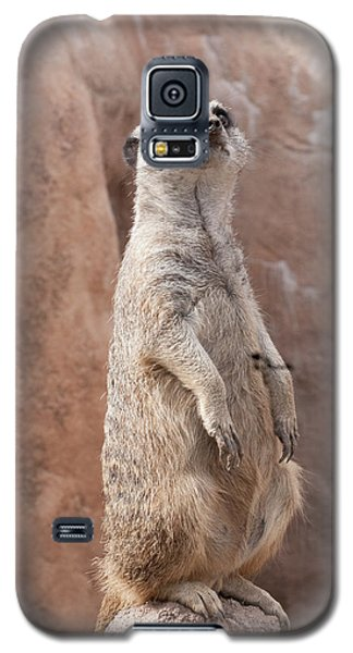 Meerkat Sentry 2 Galaxy S5 Case