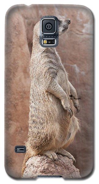 Meerkat Sentry 3 Galaxy S5 Case