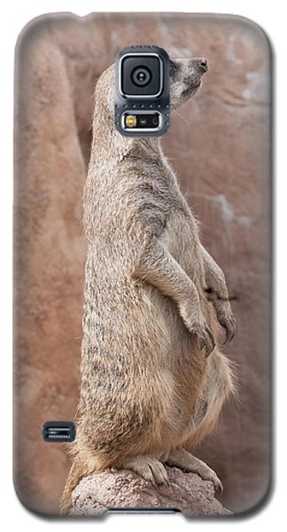 Meerkat Sentry 3 Galaxy S5 Case
