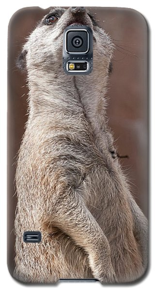 Meerkat Sentry 4 Galaxy S5 Case