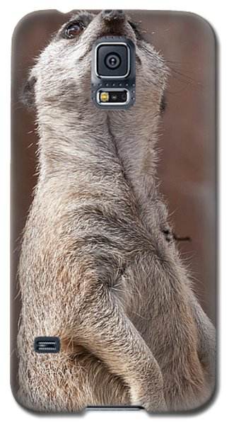 Meerkat Sentry 4 Galaxy S5 Case
