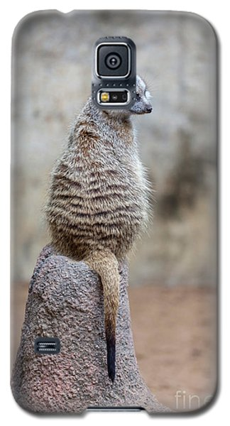 Meerkat Sitting And Looking Right Galaxy S5 Case