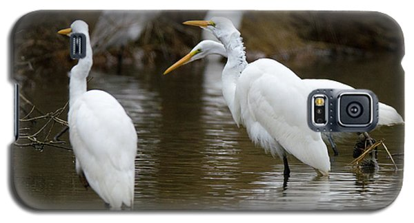 Galaxy S5 Case featuring the photograph Meeting Of The Egrets by George Randy Bass