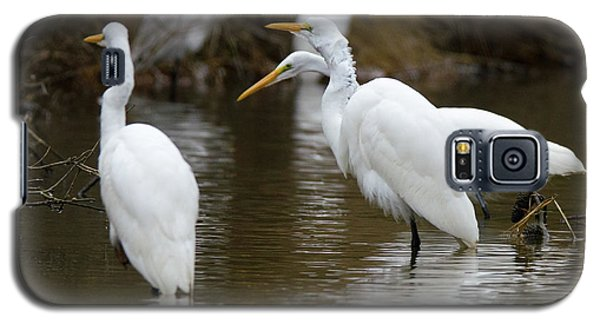 Meeting Of The Egrets Galaxy S5 Case