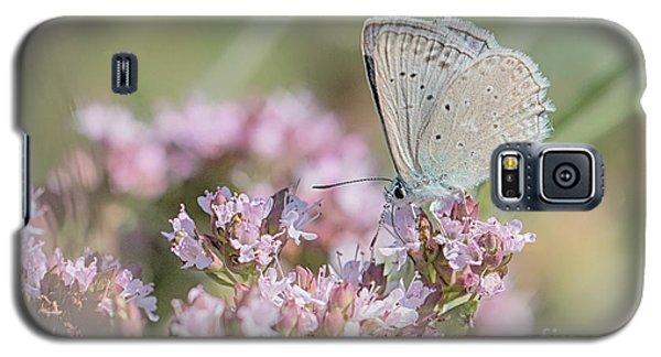 Meleagers Blue Butterfly Galaxy S5 Case by Jivko Nakev