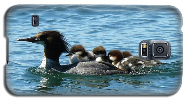 Merganser And Her Chicks Galaxy S5 Case