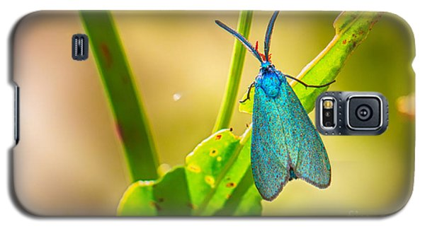 Metallic Forester Moth Galaxy S5 Case by Jivko Nakev